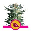 Fruit Spirit (Royal Queen Seeds) feminisiert