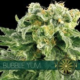 Bubble Yum (Vision Seeds) feminisiert