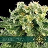 Bubble Yum (Vision Seeds) feminized