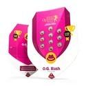 O.G. Kush (Royal Queen Seeds) feminisiert