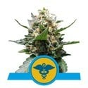 Royal Medic (Royal Queen Seeds) feminisiert