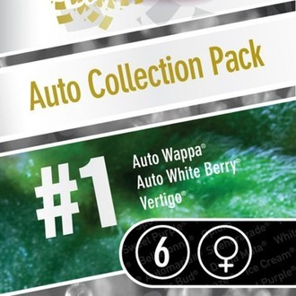 Auto Collection Pack 1 (Paradise Seeds) Femminizzata