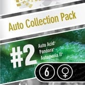 Auto Collection Pack 2 (Paradise Seeds) femminizzata