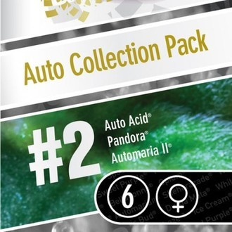 Auto Collection Pack 2 (Paradise Seeds) feminisiert