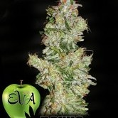 Nexus (Eva Seeds) feminized