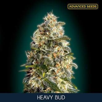 Heavy Bud (Advanced Seeds) feminisiert