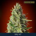 Kali 47 (Advanced Seeds) feminisiert