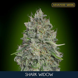 Shark Widow (Advanced Seeds) feminized