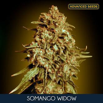 Somango Widow (Advanced Seeds) feminisiert