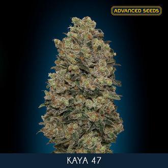 Kaya 47 (Advanced Seeds) feminisiert