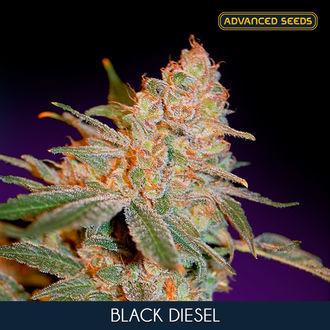 Black Diesel (Advanced Seeds) feminized