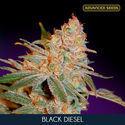 Black Diesel (Advanced Seeds) feminisiert