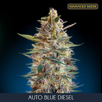 Auto Blue Diesel (Advanced Seeds) feminisiert