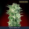 Auto Kaya 47 (Advanced Seeds) feminisiert