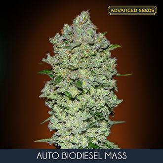 Auto Bio Diesel Mass (Advanced Seeds) feminisiert