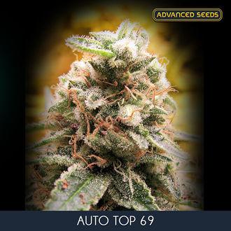 Auto Top 69 (Advanced Seeds) feminisiert
