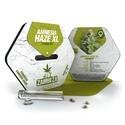 Amnesia Haze XL (Zambeza) Femminizzata