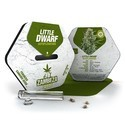 Little Dwarf Autoflowering (Zambeza) femminizzata