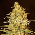 Critical Sensi Star (Delicious Seeds) femminizzati