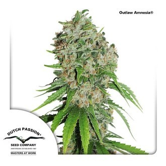 Outlaw Amnesia (Dutch Passion) femminizzata