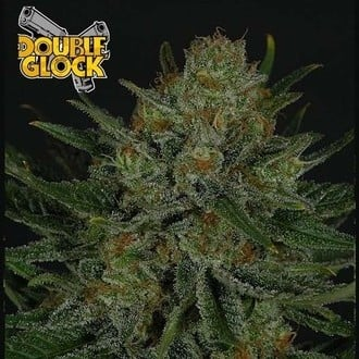Double Glock (Ripper Seeds) femminizzata