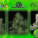 Collection 2 (Ripper Seeds) feminized