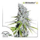 CBD Skunkhaze (Dutch Passion) femminizzata