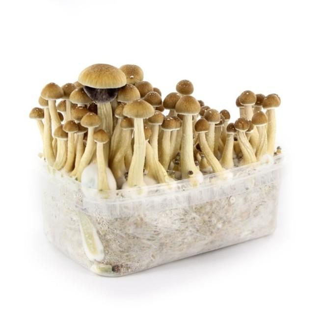 Magic Mushroom Grow Kit | Supa Gro Kit