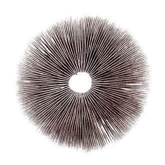 Sporenabdruck Psilocybe Cubensis Ecuador