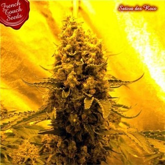 Sativa Des Rois (French Touch Seeds) feminisiert