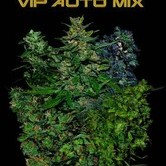 VIP Auto Mix (VIP Seeds) feminisiert