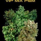 VIP Mix (VIP Seeds) femminizzati
