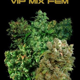 VIP Mix (VIP Seeds) feminized