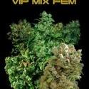 VIP Mix (VIP Seeds) feminisiert