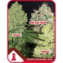 Collection 1 (Medical Seeds) feminized