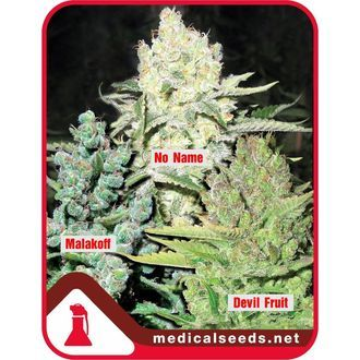 Collection 4 (Medical Seeds) feminisiert