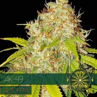 AK-49 Autoflowering (Vision Seeds) femminizzata
