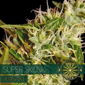 Super Skunk Autoflowering (Vision Seeds) feminized