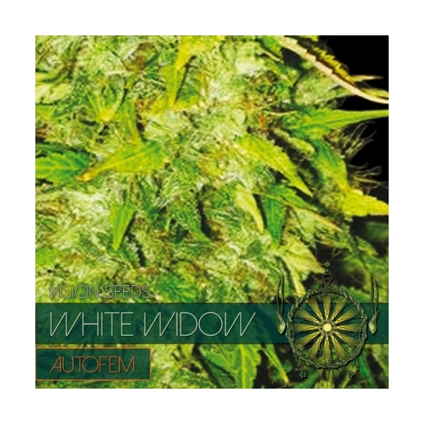 White widow autoflowering vision seeds feminized zamnesia white widow autoflowering vision seeds feminized mightylinksfo