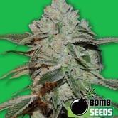 Atomic (Bomb Seeds) femminizzata