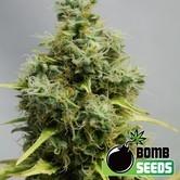 Big Bomb (Bomb Seeds) femminizzata