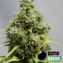 Big Bomb (Bomb Seeds) feminized