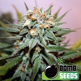 Hash Bomb (Bomb Seeds) femminizzata