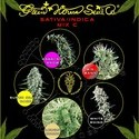 Sativa/Indica Mix C (Greenhouse Seeds) feminisiert