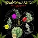 Sativa/Indica Mix C (Greenhouse Seeds) feminized