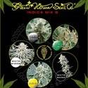Indica Mix G (Greenhouse Seeds) femminizzata