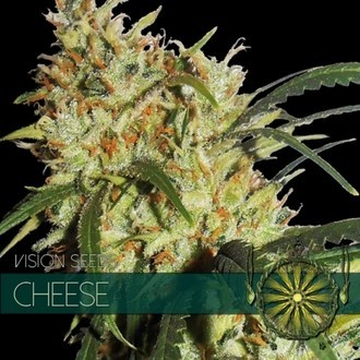 Cheese (Vision Seeds) femminizzato