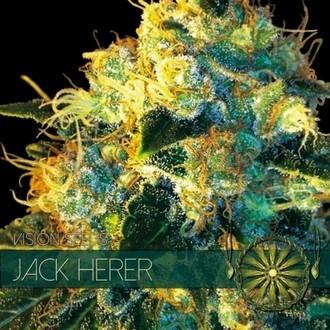 Jack Herer (Vision Seeds) femminizzato