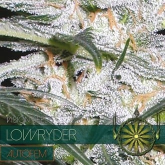 Lowryder (Vision Seeds) feminized