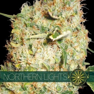 Northern Lights (Vision Seeds) femminizzato